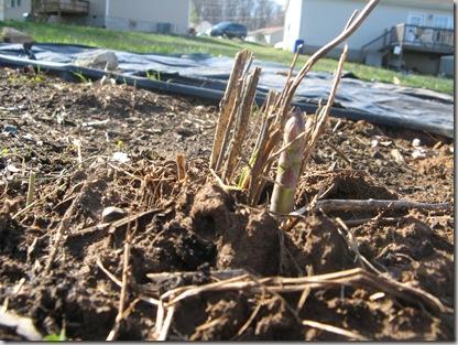 2010-03-30 Spring has sprung 003