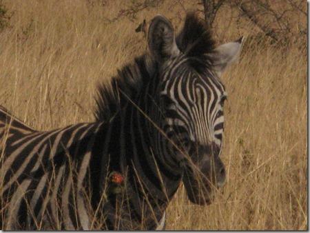 Africa 073
