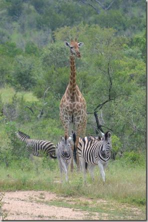 Christmas at Kruger 146