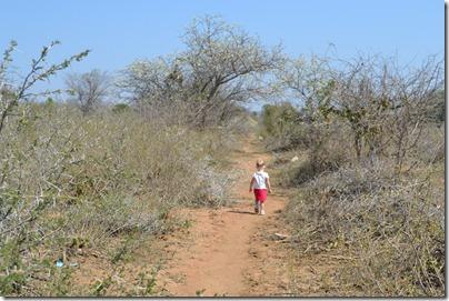 Bush Walk 095